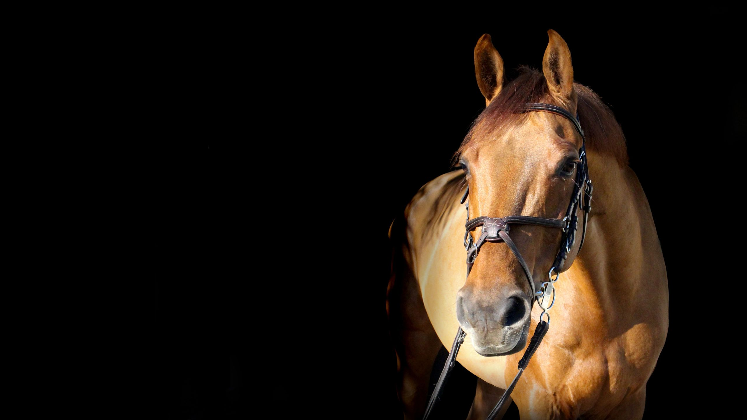 equine web design and web development in Kent by Storm